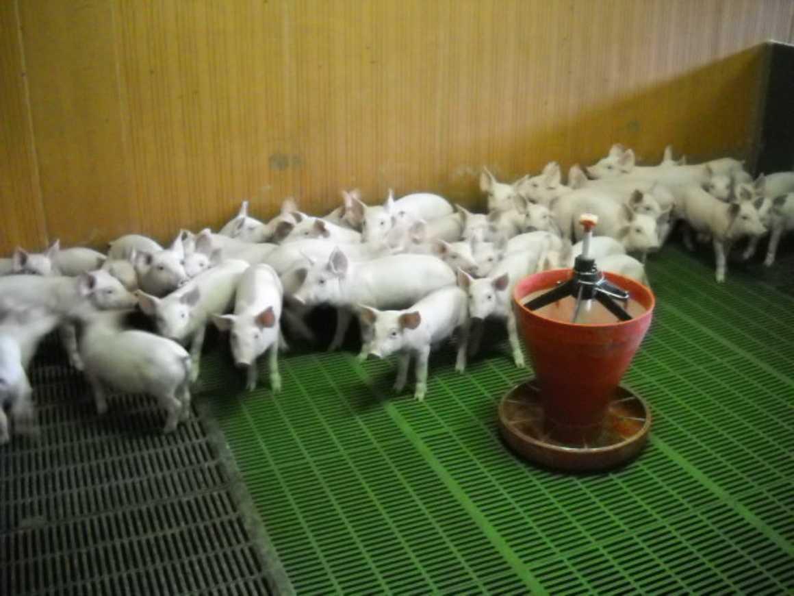 Les 1S3 ont visité un élevage de porc et la station de traitement des effluents dscn3310