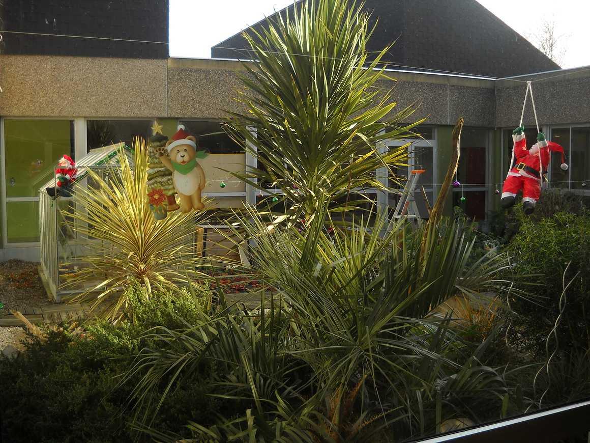 Un Noël mouvementé dans le Patio dscn3501