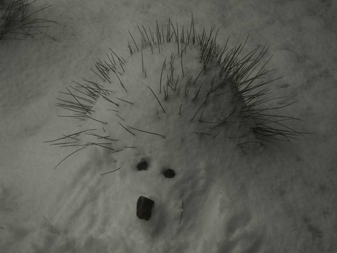 Le lycée de nouveau sous la neige : reportage photo dscn3869