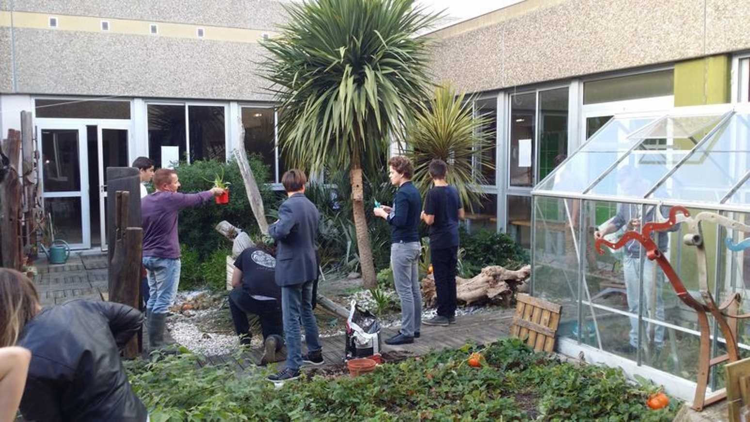 Nettoyage du patio et plantations d''automne 0