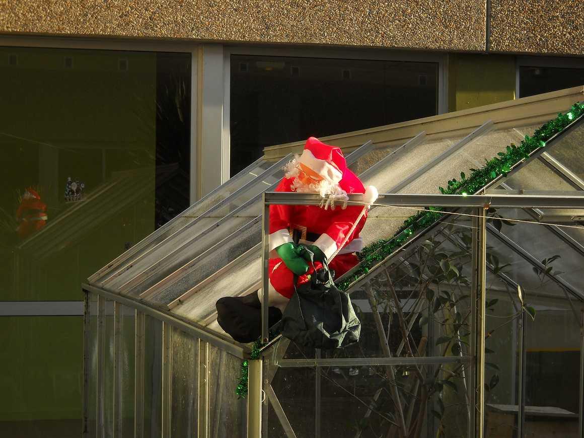 Un Noël mouvementé dans le Patio dscn3517