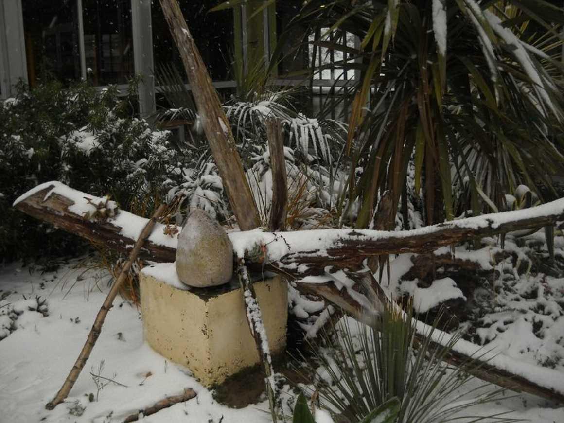 Le lycée de nouveau sous la neige : reportage photo dscn3863